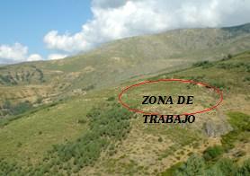 Labores de reforestación en la Sierra de Candelario