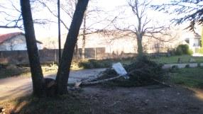 Un árbol caído y varias ramas partidas en el parque municipal por los fuertes vientos de la pasada madrugada.