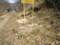 """Cruz Roja planta árboles en Candelario con el centro de día """"Los Girasoles"""""""