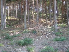 La Junta, Europa y el MMARM se olvidan de Candelario en materia forestal