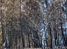 Reflexiones sobre un bosque quemado