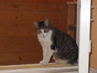 Desaparecido un gato