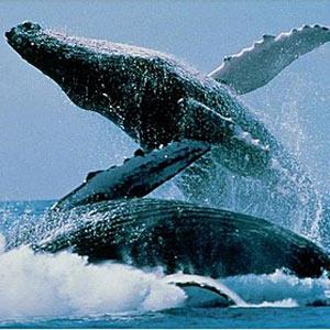 Castilla y León ¿Tierra de ballenas?