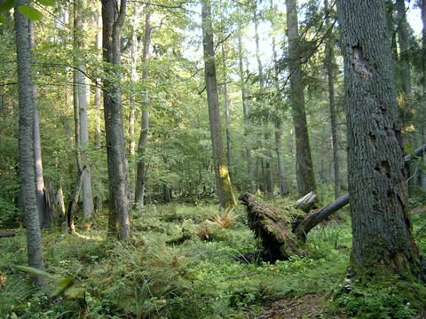 Más del 91 por ciento de los árboles de Castilla y León tenía un aspecto saludable en 2010
